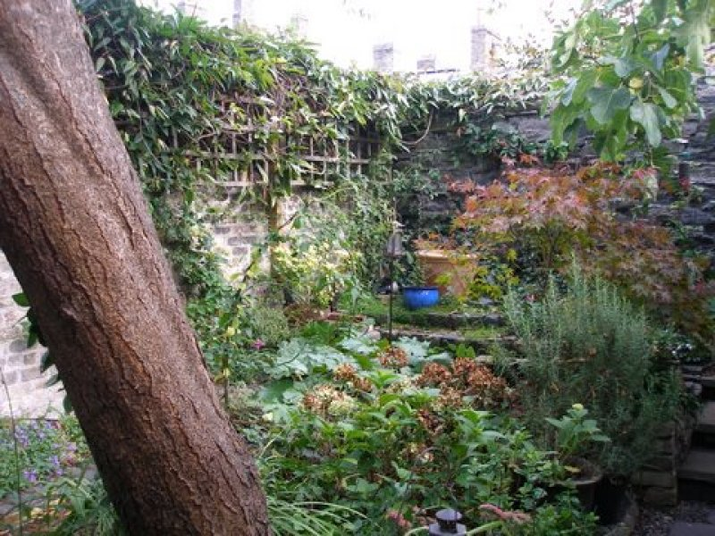 This Small City Garden Design Is Relaxing And Bird Friendly. It Is A Shady  Garden. Ferns And Hostas Give Beautiful Shades Of Green And A Rambling Rose  ...